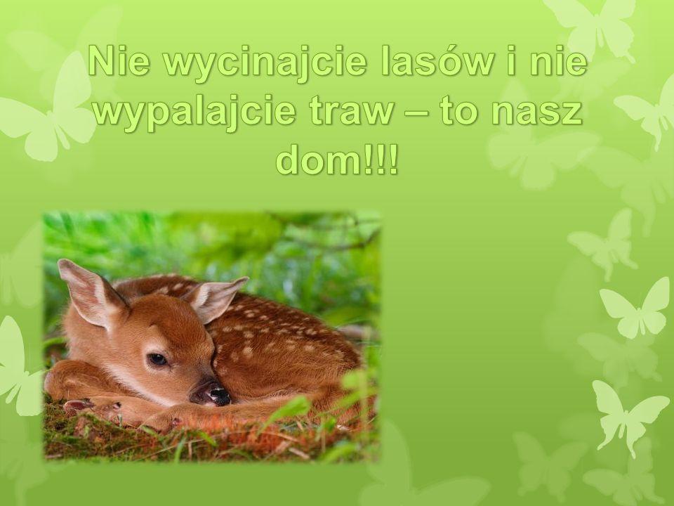 Nie wycinajcie lasów i nie wypalajcie traw – to nasz dom!!!