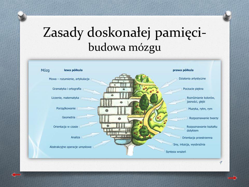 Zasady doskonałej pamięci- budowa mózgu