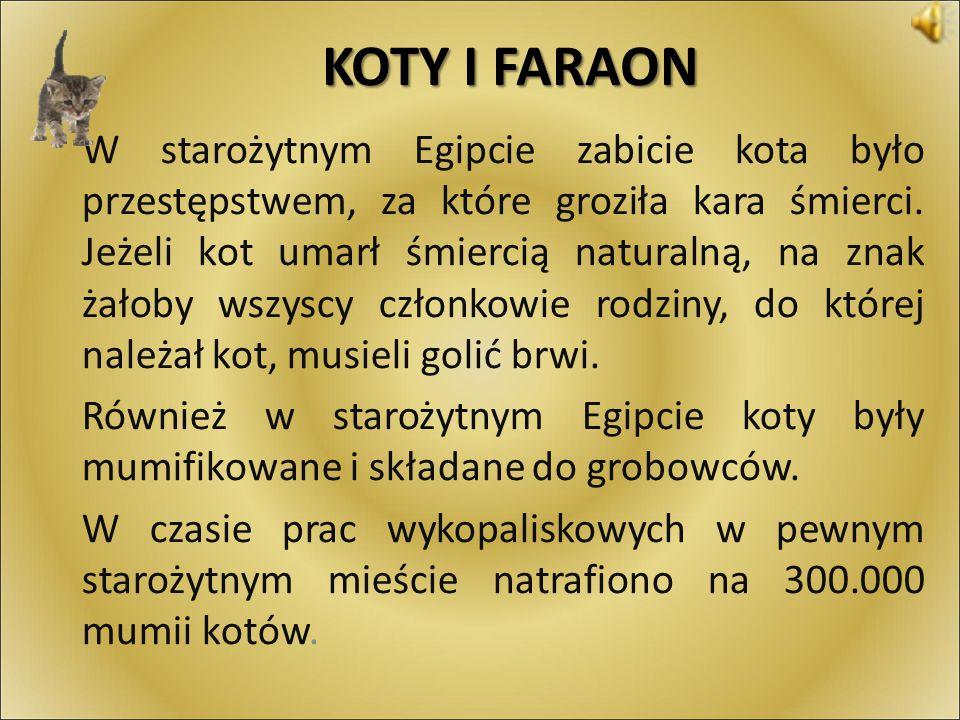 KOTY I FARAON