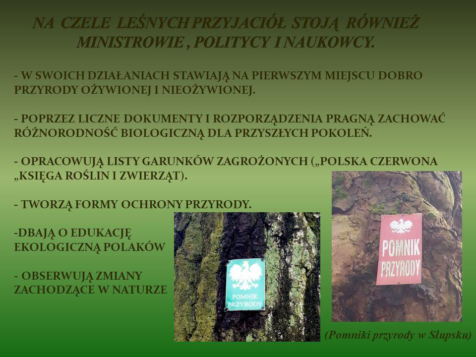 (Pomniki przyrody w Słupsku)