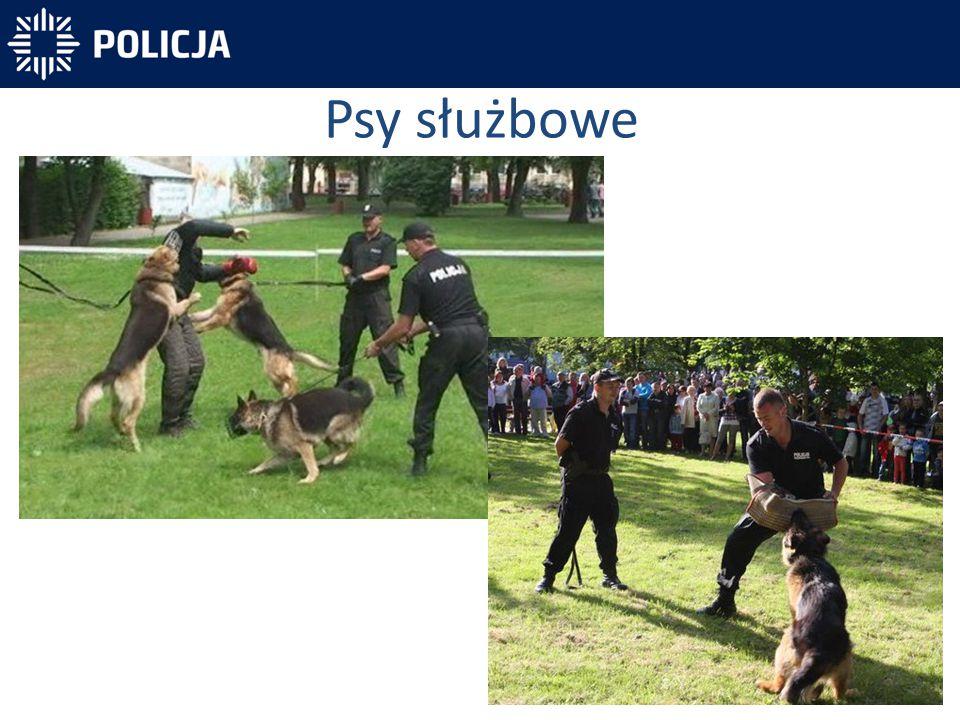 Psy służbowe