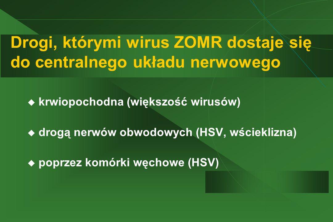 Drogi, którymi wirus ZOMR dostaje się do centralnego układu nerwowego