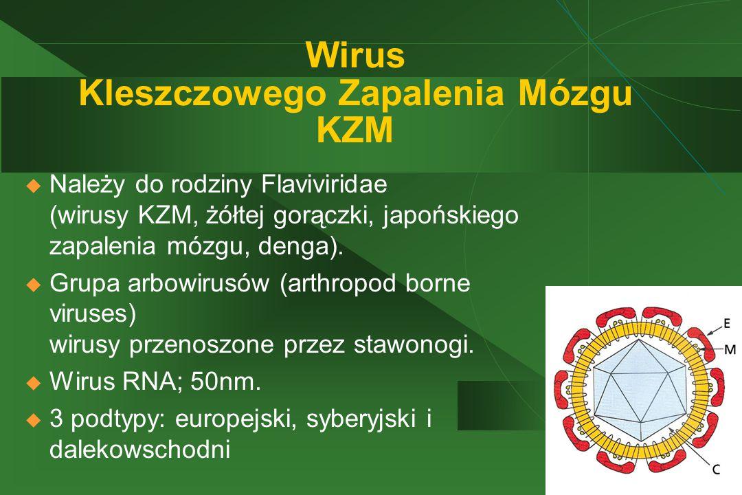 Wirus Kleszczowego Zapalenia Mózgu KZM
