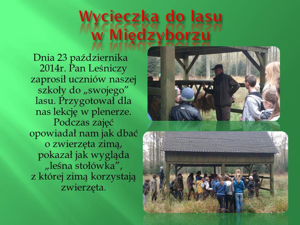 Wycieczka do lasu w Międzyborzu