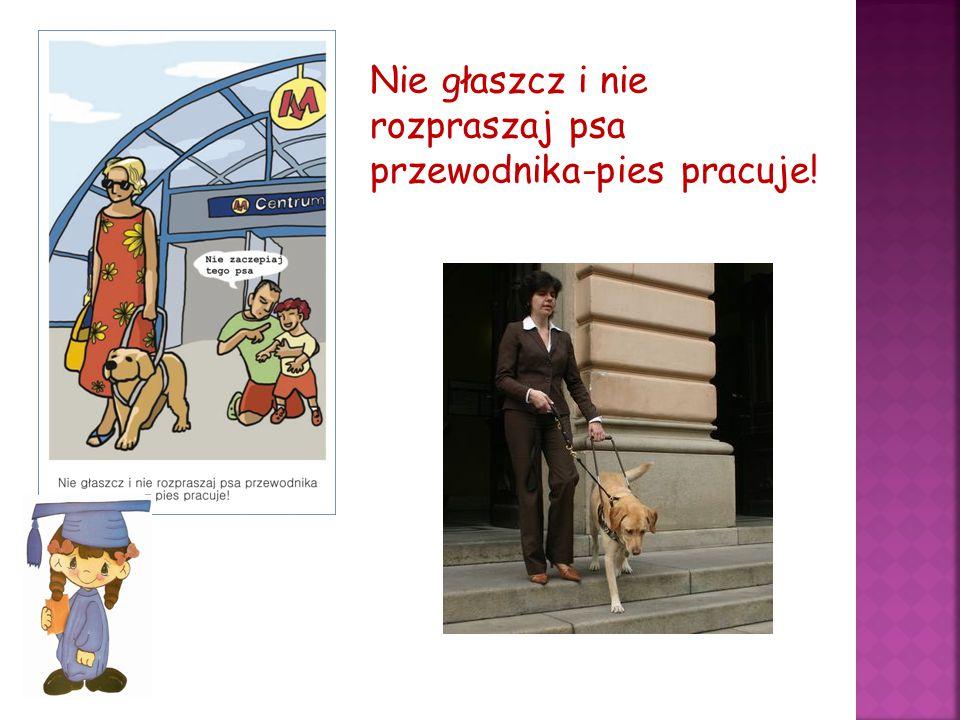 Nie głaszcz i nie rozpraszaj psa przewodnika-pies pracuje!