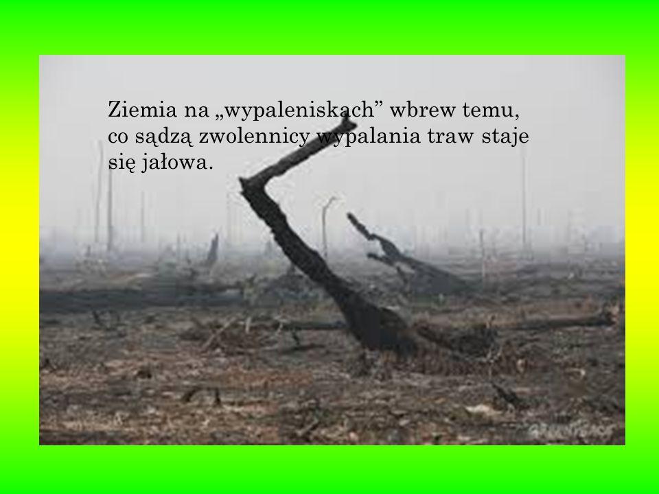 """Ziemia na """"wypaleniskach wbrew temu, co sądzą zwolennicy wypalania traw staje się jałowa."""