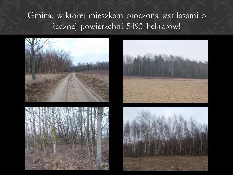 Gmina, w której mieszkam otoczona jest lasami o łącznej powierzchni 5493 hektarów!