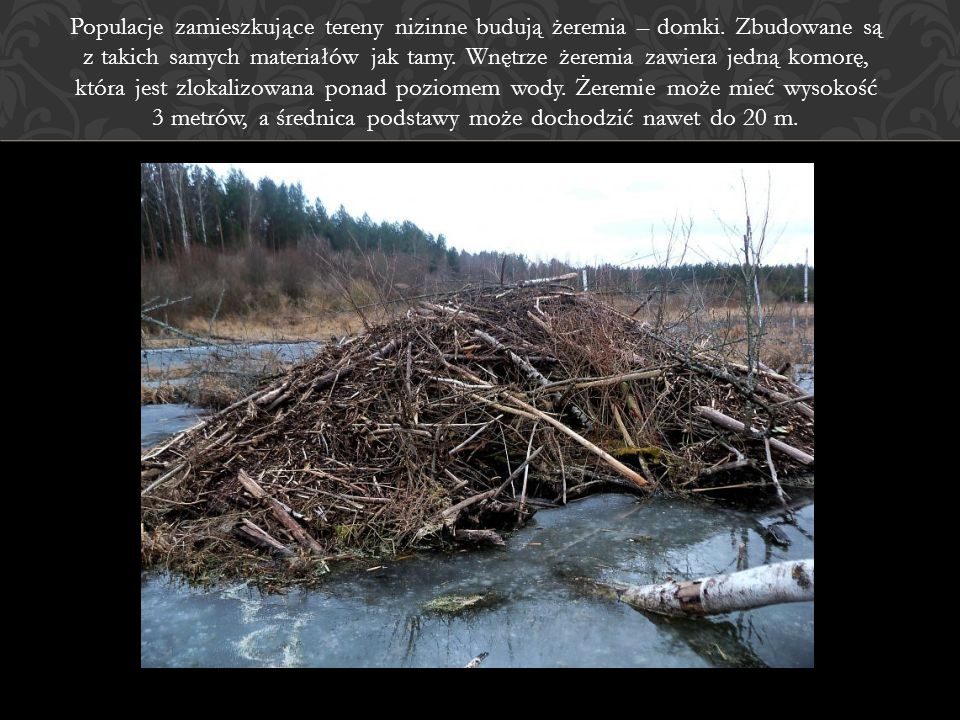 Populacje zamieszkujące tereny nizinne budują żeremia – domki