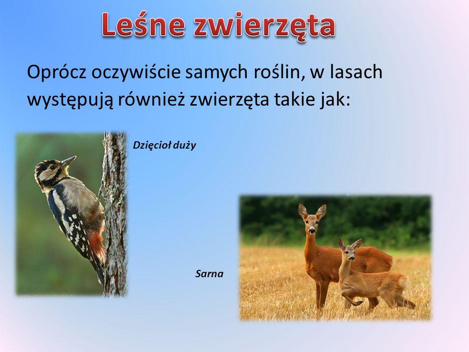 Leśne zwierzęta Oprócz oczywiście samych roślin, w lasach występują również zwierzęta takie jak: Dzięcioł duży.