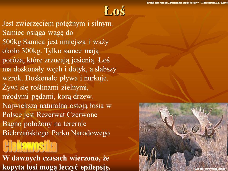 """Łoś Źródło informacji: """"Zwierzaki z mojej okolicy – T.Brzozowska, E. Kutyło."""
