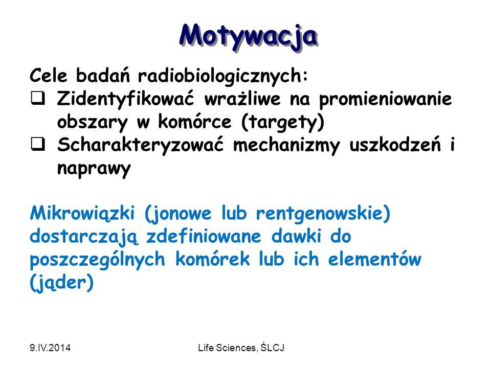 Motywacja Cele badań radiobiologicznych: