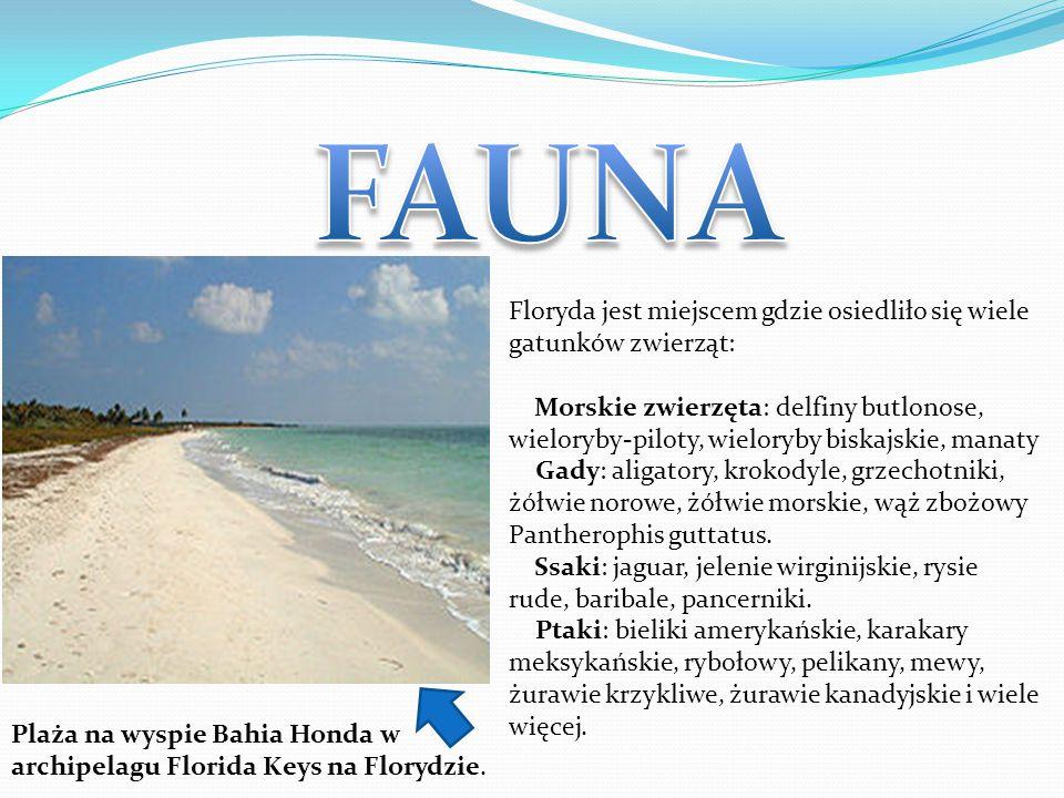 FAUNA Floryda jest miejscem gdzie osiedliło się wiele gatunków zwierząt: