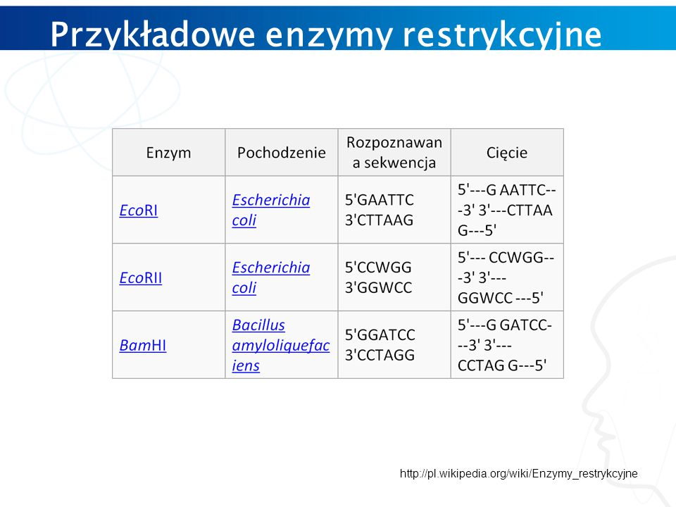 Przykładowe enzymy restrykcyjne