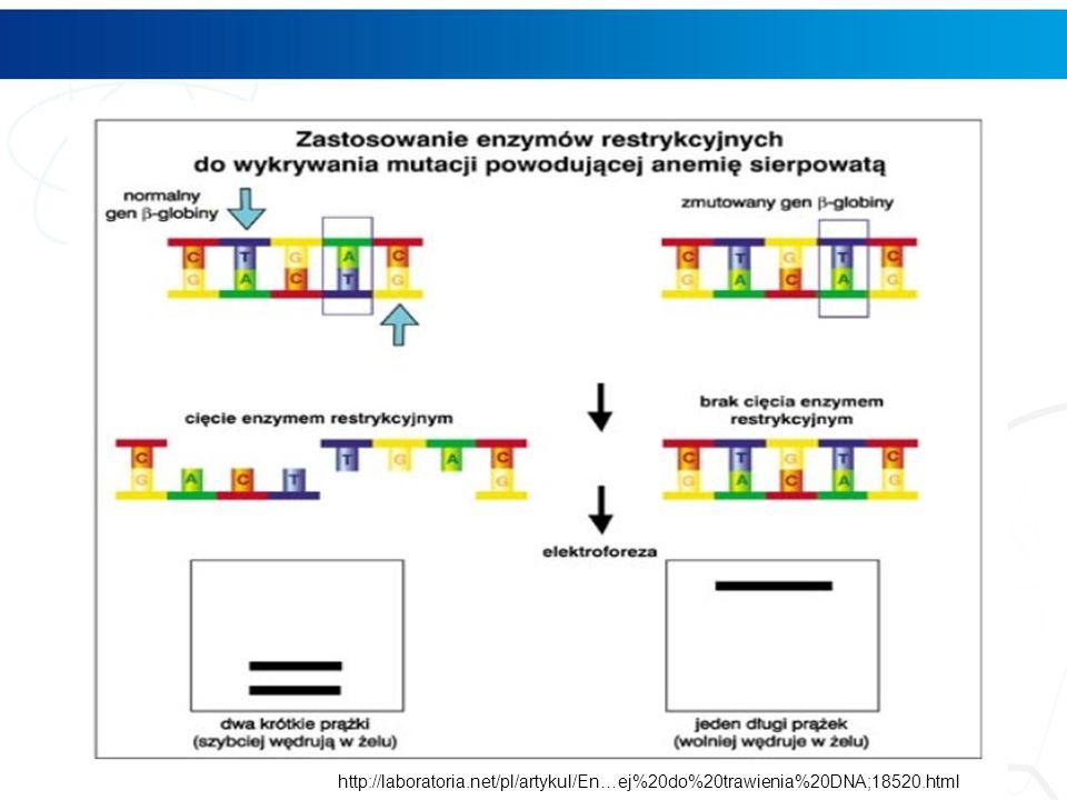 http://laboratoria. net/pl/artykul/En…ej%20do%20trawienia%20DNA;18520