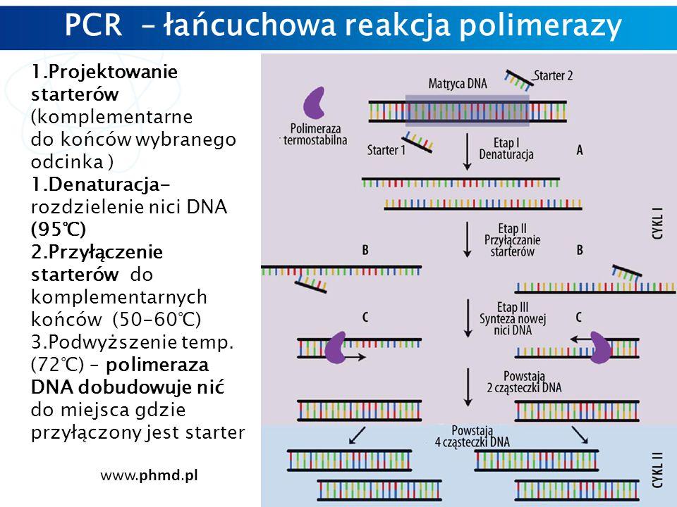 PCR – łańcuchowa reakcja polimerazy