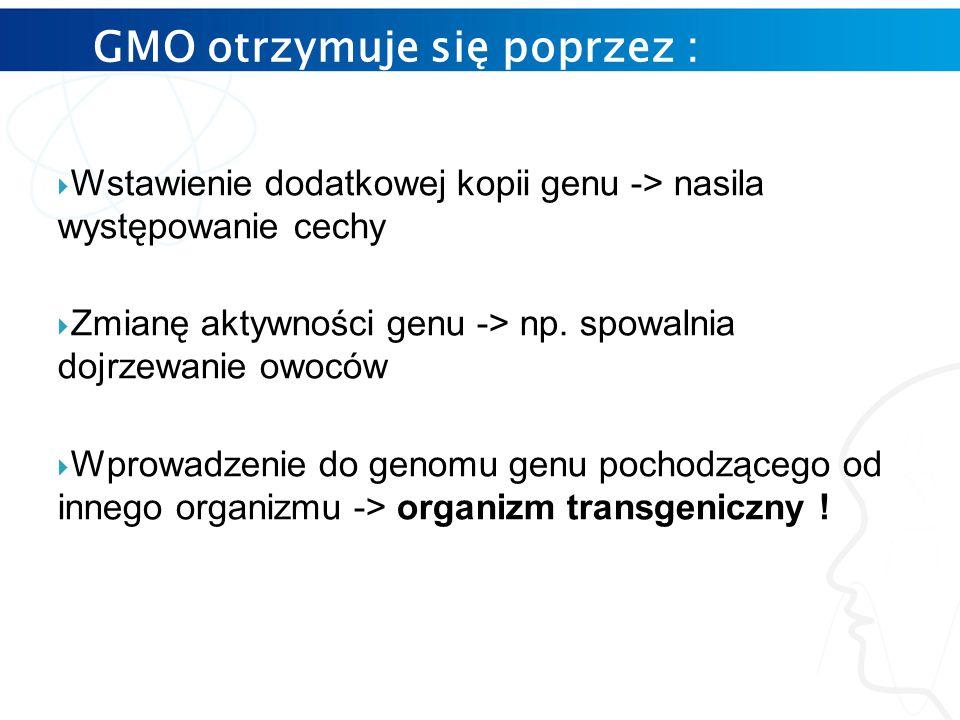 GMO otrzymuje się poprzez :