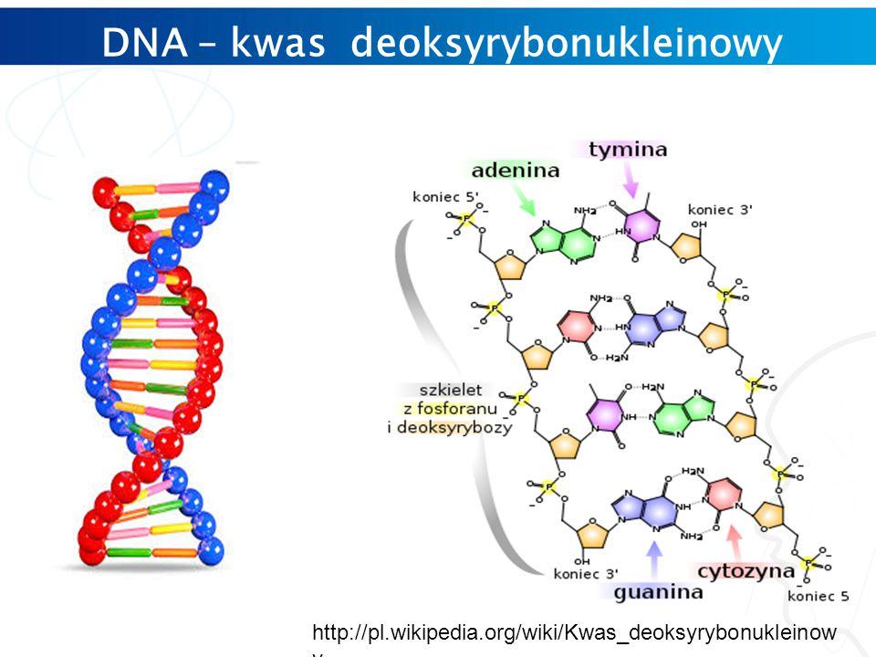 DNA – kwas deoksyrybonukleinowy