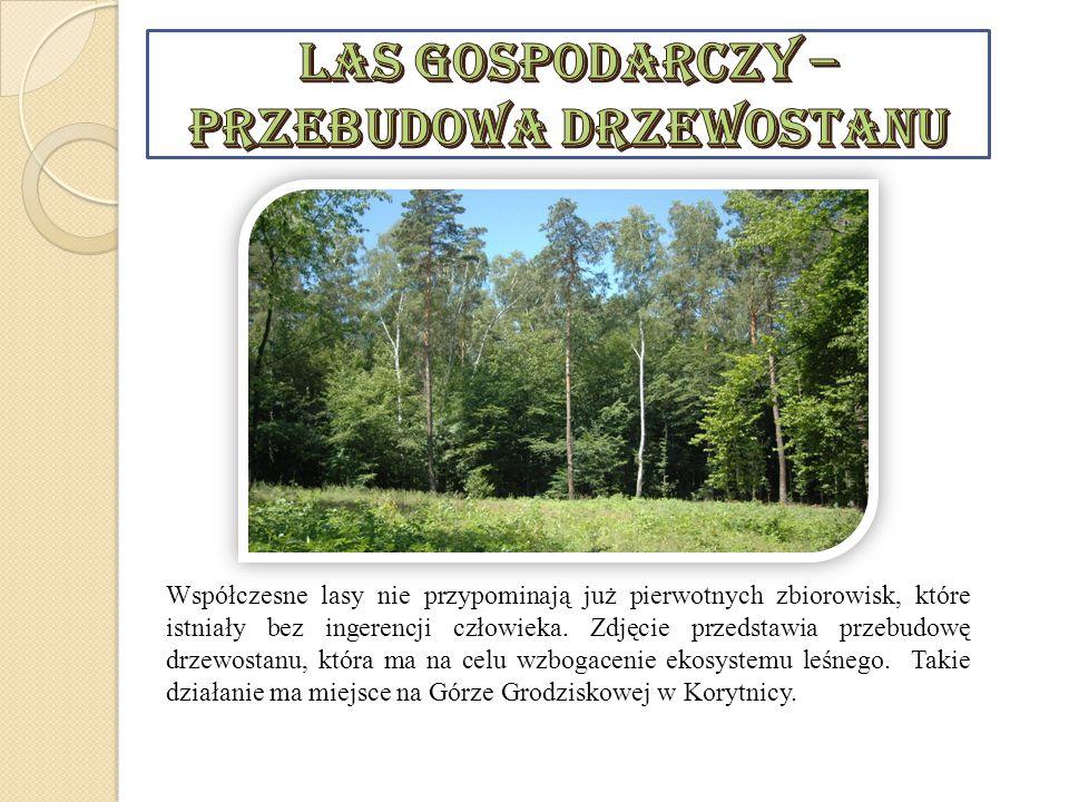 Las Gospodarczy – przebudowa drzewostanu