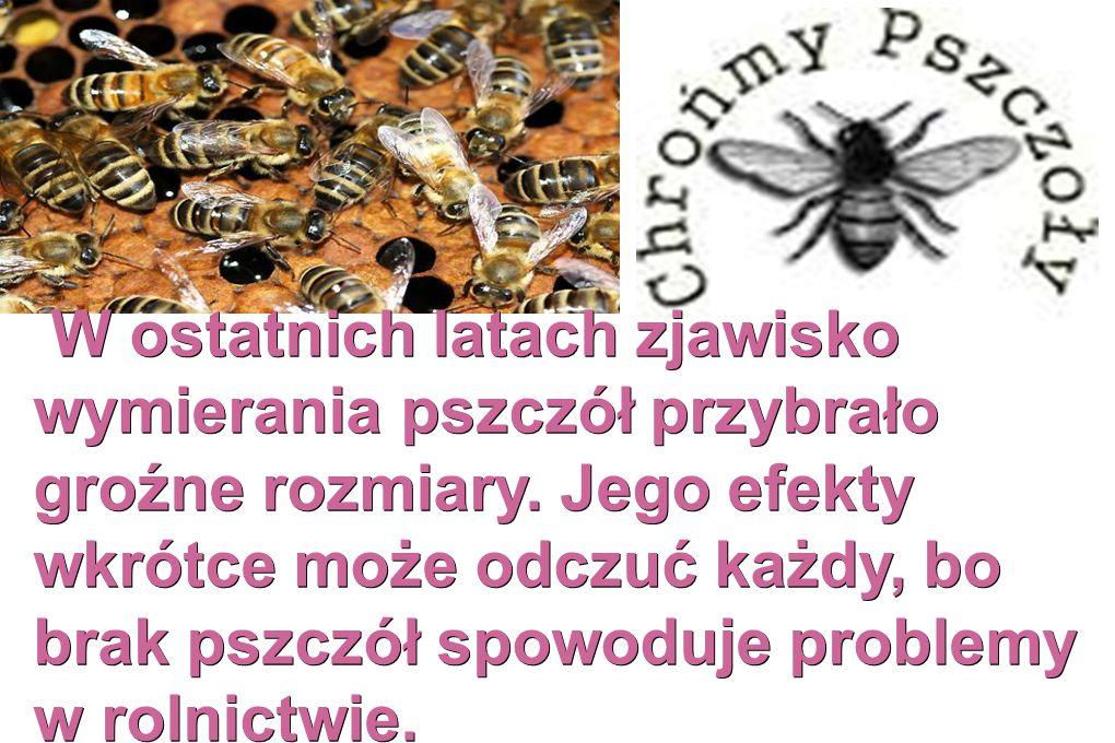 W ostatnich latach zjawisko wymierania pszczół przybrało groźne rozmiary.