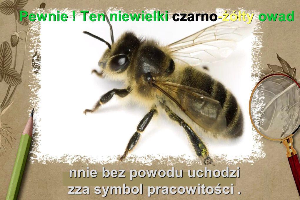 Pewnie ! Ten niewielki czarno-żółty owad