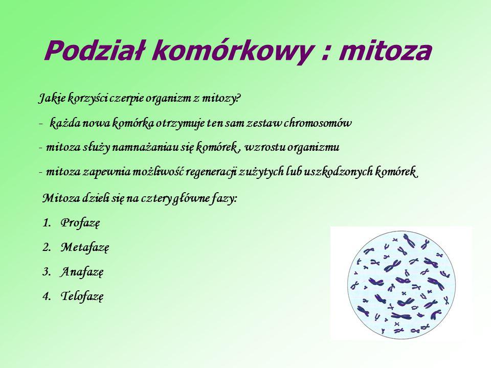 Podział komórkowy : mitoza