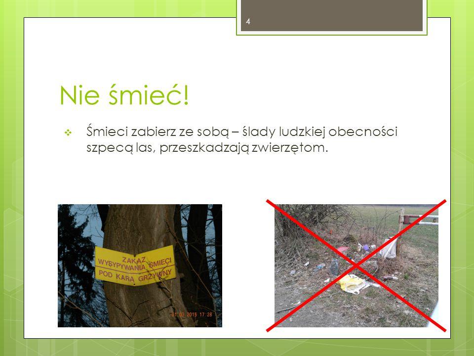 Nie śmieć! Śmieci zabierz ze sobą – ślady ludzkiej obecności szpecą las, przeszkadzają zwierzętom.