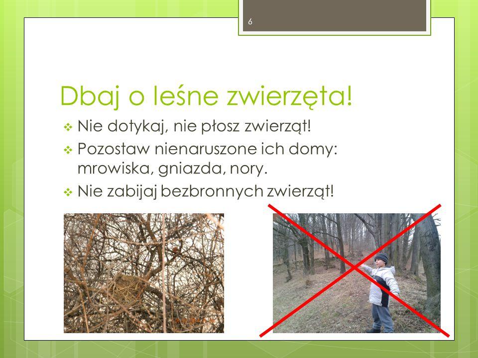 Dbaj o leśne zwierzęta! Nie dotykaj, nie płosz zwierząt!