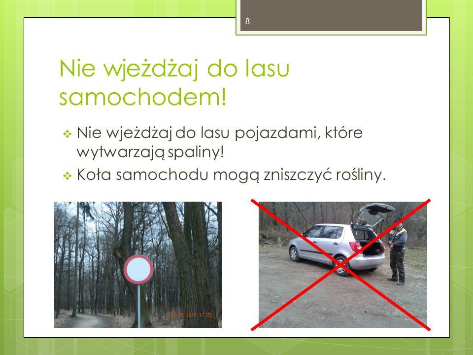Nie wjeżdżaj do lasu samochodem!