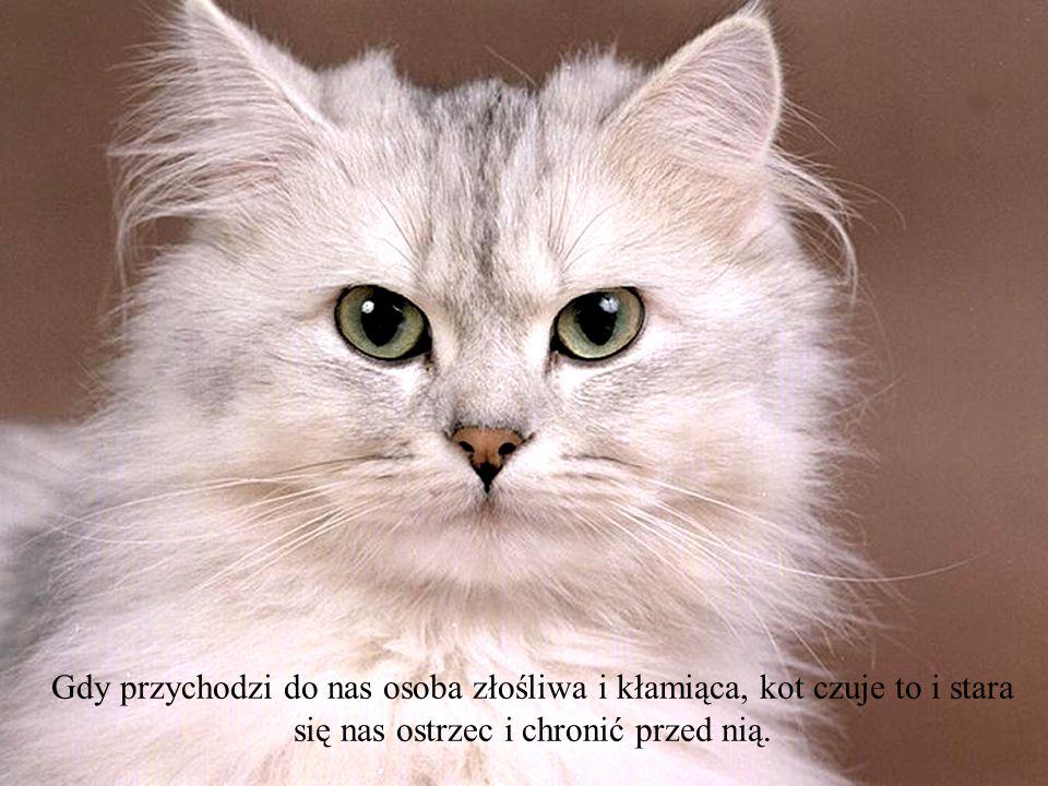 Gdy przychodzi do nas osoba złośliwa i kłamiąca, kot czuje to i stara się nas ostrzec i chronić przed nią.