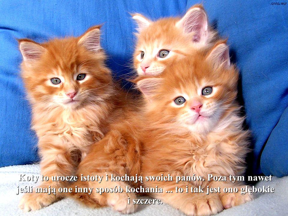 Koty to urocze istoty i kochają swoich panów