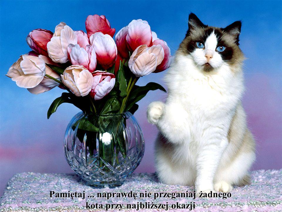 Pamiętaj ... naprawdę nie przeganiaj żadnego kota przy najbliższej okazji