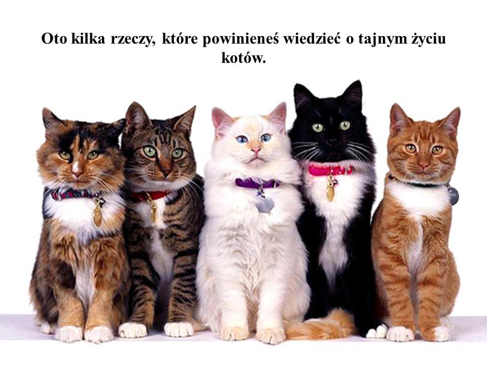Oto kilka rzeczy, które powinieneś wiedzieć o tajnym życiu kotów.