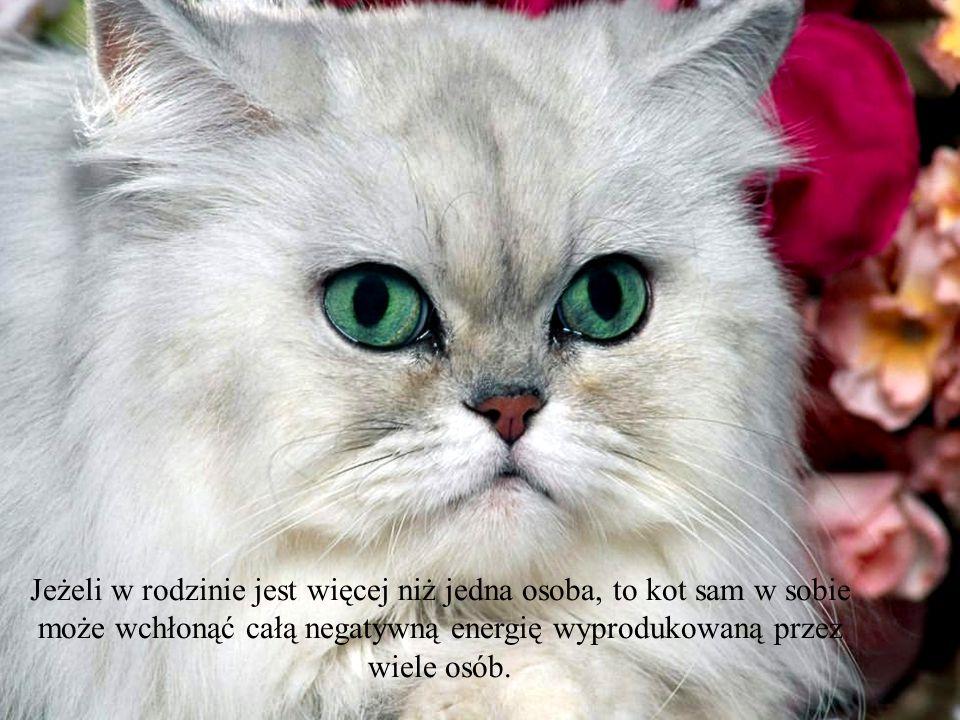 Jeżeli w rodzinie jest więcej niż jedna osoba, to kot sam w sobie może wchłonąć całą negatywną energię wyprodukowaną przez wiele osób.