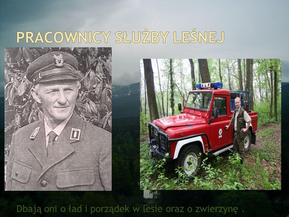 Pracownicy służby leśnej
