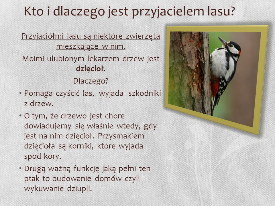 Kto i dlaczego jest przyjacielem lasu