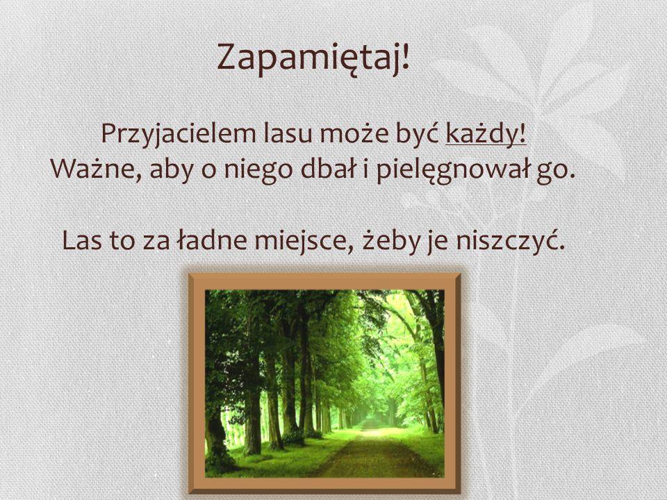 Zapamiętaj. Przyjacielem lasu może być każdy