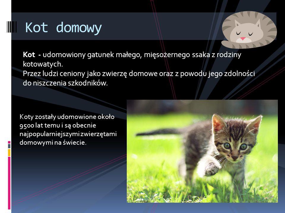 Kot domowy Kot - udomowiony gatunek małego, mięsożernego ssaka z rodziny kotowatych.