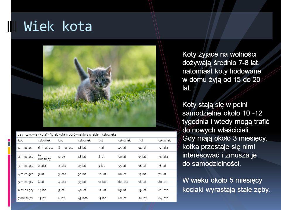 Wiek kota Koty żyjące na wolności dożywają średnio 7-8 lat, natomiast koty hodowane. w domu żyją od 15 do 20 lat.