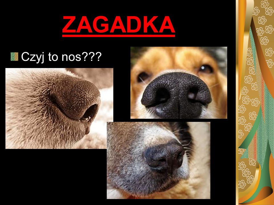 ZAGADKA Czyj to nos NOS PSA