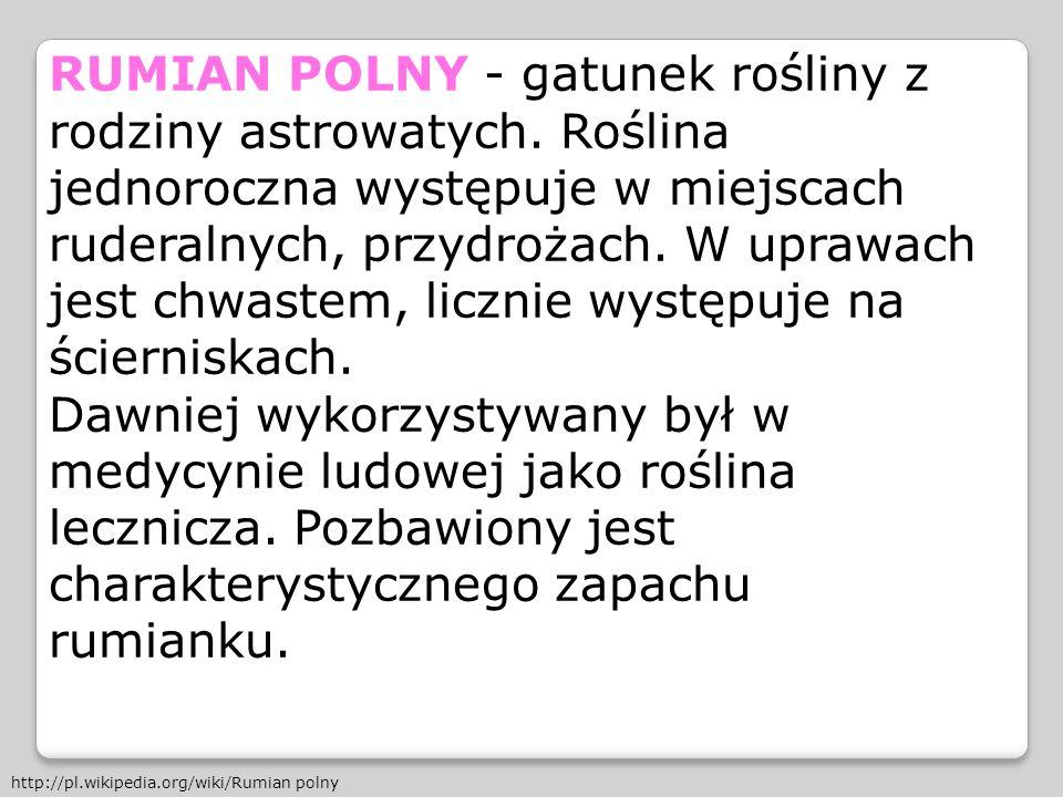 RUMIAN POLNY - gatunek rośliny z rodziny astrowatych
