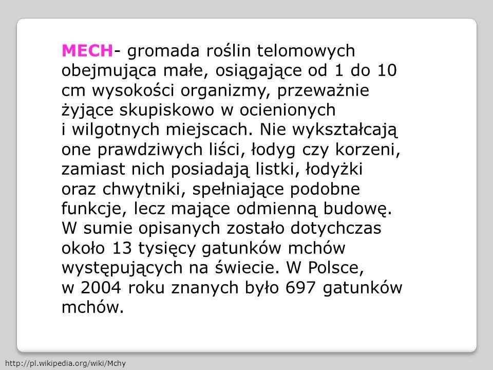 w 2004 roku znanych było 697 gatunków mchów.