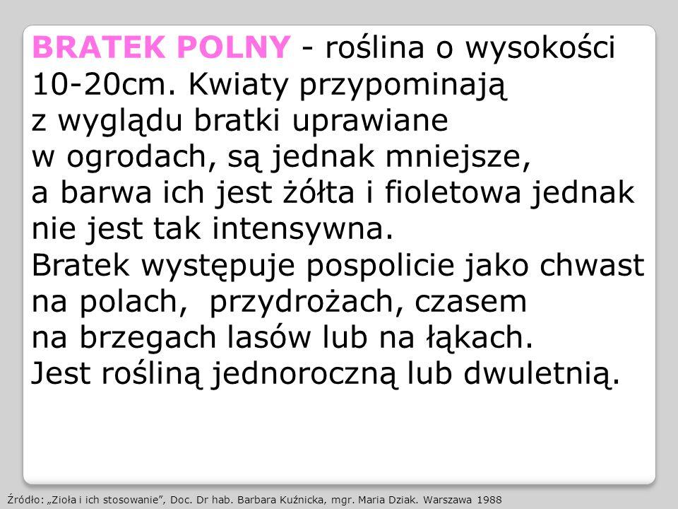 BRATEK POLNY - roślina o wysokości 10-20cm. Kwiaty przypominają