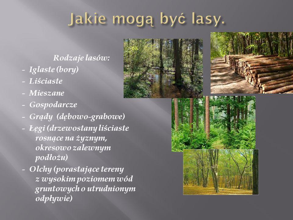 Jakie mogą być lasy.