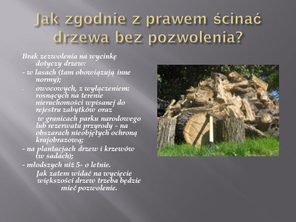 Jak zgodnie z prawem ścinać drzewa bez pozwolenia