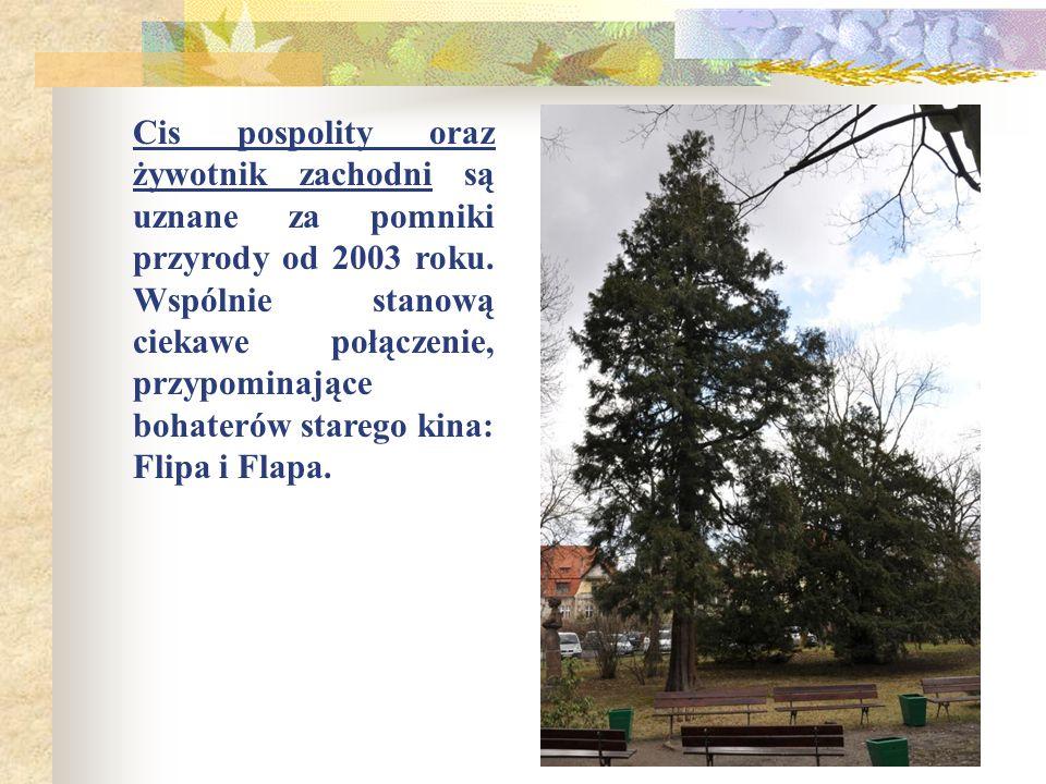 Cis pospolity oraz żywotnik zachodni są uznane za pomniki przyrody od 2003 roku.