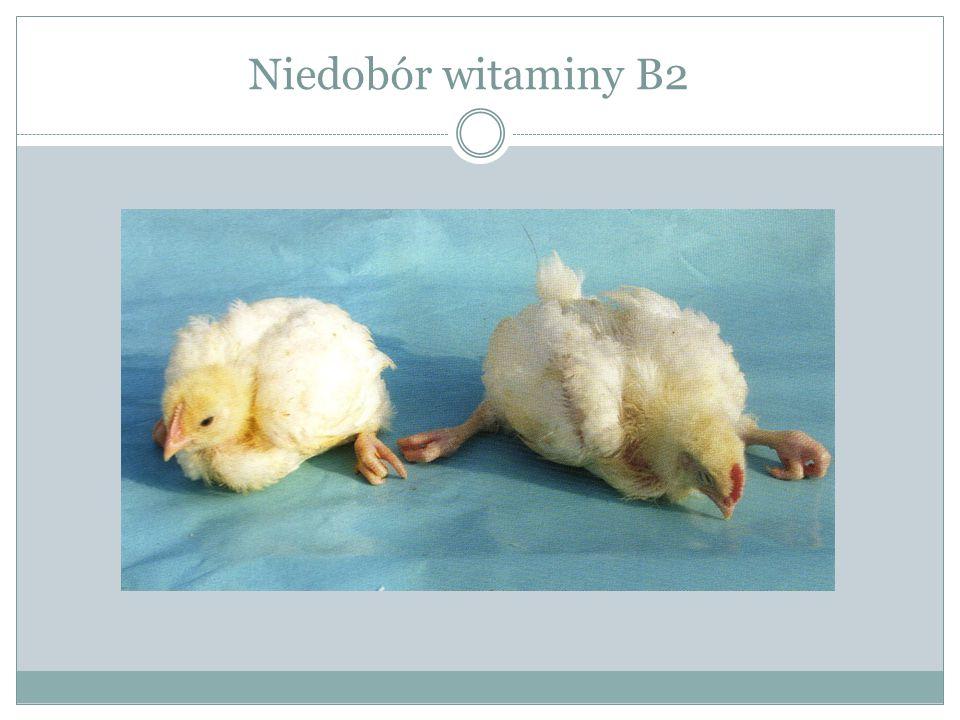 Niedobór witaminy B2
