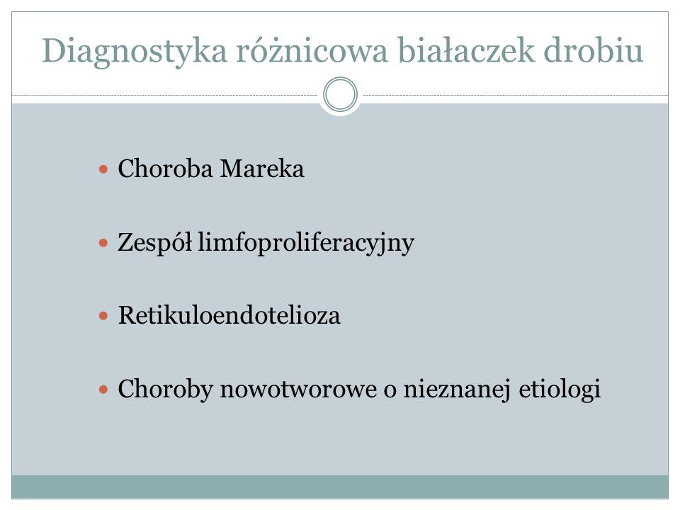 Diagnostyka różnicowa białaczek drobiu