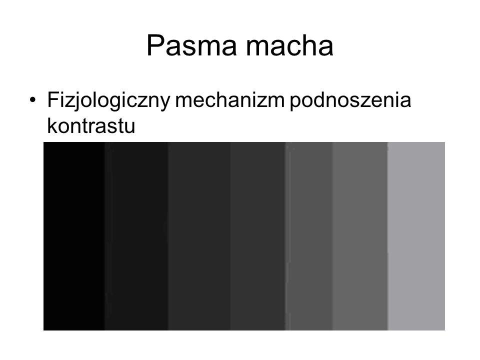 Pasma macha Fizjologiczny mechanizm podnoszenia kontrastu