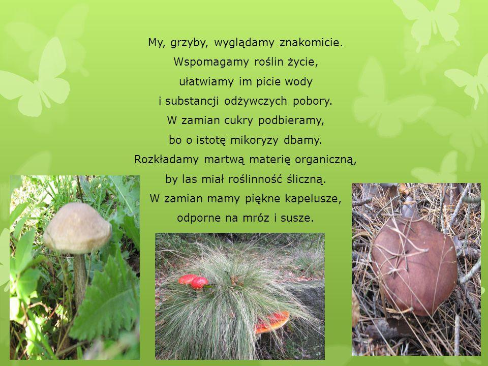 My, grzyby, wyglądamy znakomicie. Wspomagamy roślin życie,