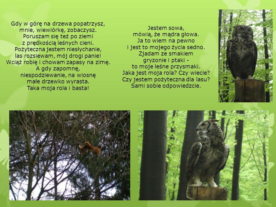 Gdy w górę na drzewa popatrzysz, mnie, wiewiórkę, zobaczysz.